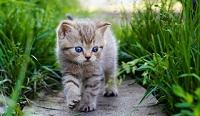 Truyện ngắn hay: Hoàng tử Mèo